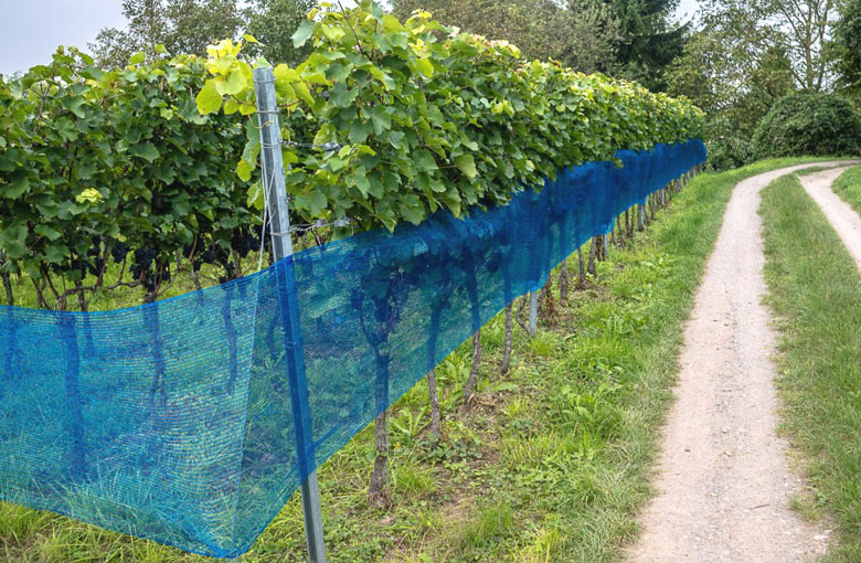Wasp protection nets Netten