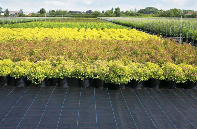 Ground cover fabric Netten